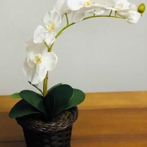 Cestinha com orquídea branca